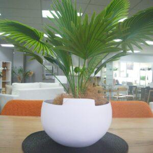 Ceramic Pot with Plant