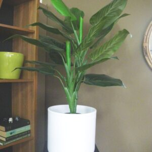 Large White Pot with Plant